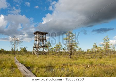 Bog landscape with observation tower and boardwalk
