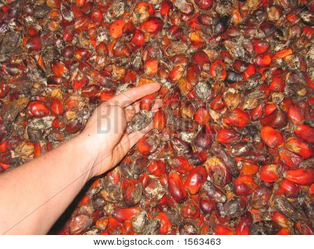 African Typical Small Fruits On A Warehouse With A Hand Collecting Them, Cameroon, Africa