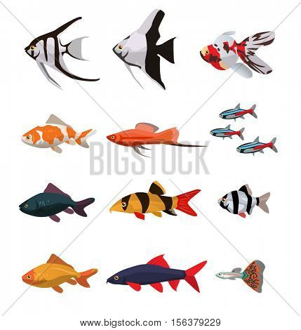 Collection of freshwater fishes vector illustration in flat style