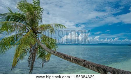 Coconat Palm on the Beach of Kri Island. Gam Island in Background. Raja Ampat, Indonesia, West Papua.