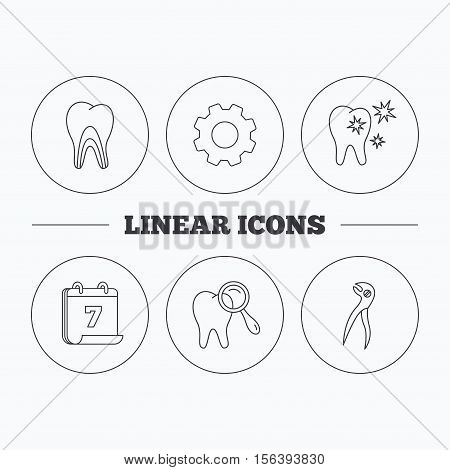 Healthy teeth, dentinal tubules and pliers icons. Dental diagnostics linear sign. Flat cogwheel and calendar symbols. Linear icons in circle buttons. Vector