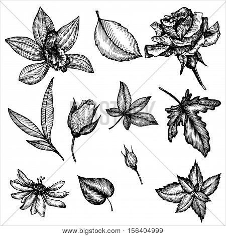 vintage vector floral set of isolated elements in victorian style, flowers, buds and leaves, ink drawing, imitation of engraving, hand drawn design elements