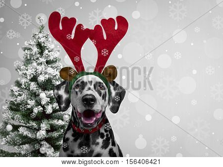 poster of Christmas card. Dog Dalmatian dress for new year as Christmas reindeer horns. Christmas background with snowflakes on the dog. Behind dog Dalmatian Christmas tree. Blank space.