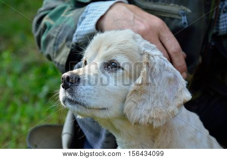 A close up of the small young white dog.