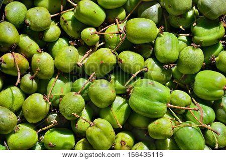 A close up of the berries on Far-East (Actinidia arguta) (hardy kiwi).