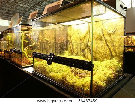Pet shop terrarium