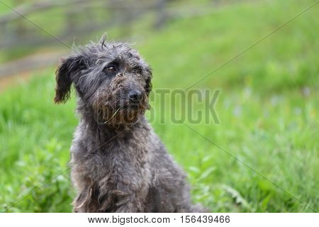 Sad and lonely cute dog in nature against green background