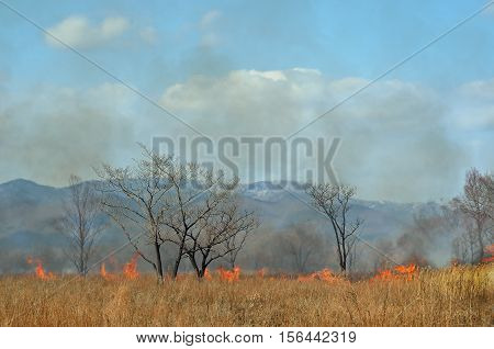 A landscape on brushfire: flame smoke ash trees and sky.
