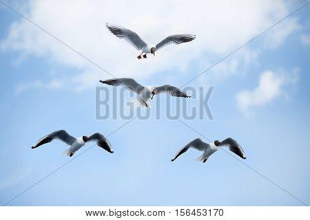 white sea gulls flying in the blue sunny sky