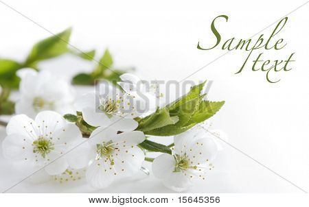 white flowers and easy to remove the text