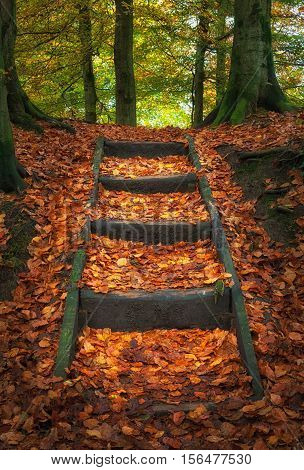 Penllergare woods in Autumn Autumn leaves and steps at Penllergare woods in Swansea, UK