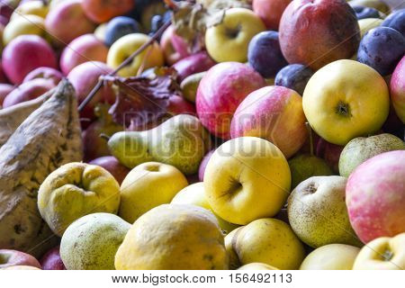 Autumn Fruit. Pears, Apple And Grapes. Autumn Harvest