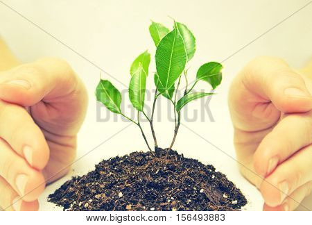 Plant in a hand on white background