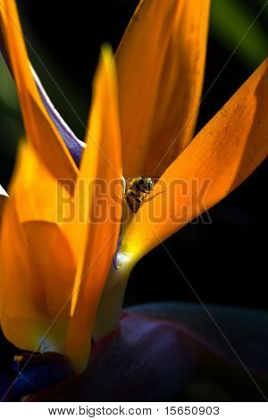 Bee in a Bird