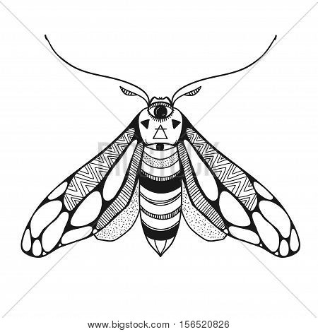 vector illustration of a moth with ornamental wings, decorative hand drawn vector butterfly isolated on white