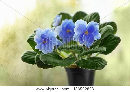 Beautiful violet flower on blurred background, close up view