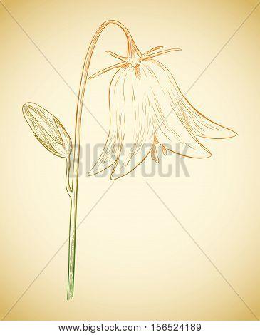 Vector Bell Flower.