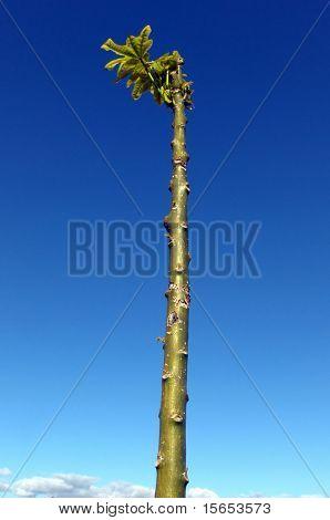 Baum aufsteigen