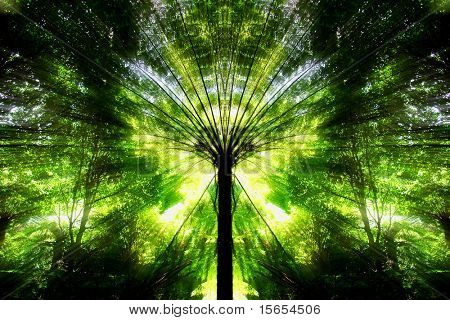 Symmetrical Nature Abstract Image
