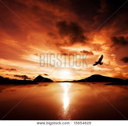 A sea bird flies off into the amazing sunset