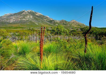 Australian flora at Wilsons Promontory