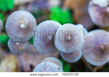 Macro Of Small Uneatable Mushrooms Growing In Autumn Forest