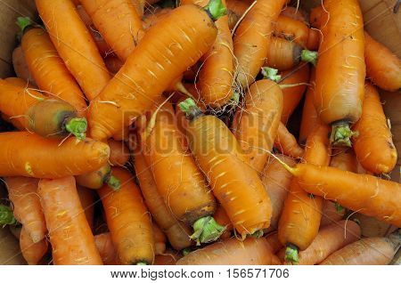 Rustic carrots piled for farmers market  display