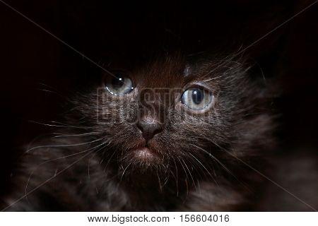 Kitty portrait. Closeup of nice small black kitty face