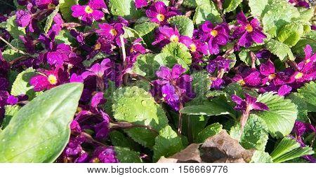 Spring Flowerbed