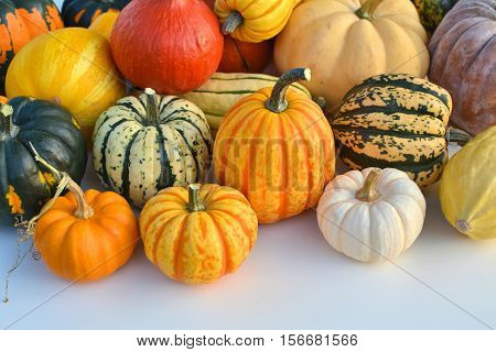 Autumn colorful squashes and pumpkins varieties collection