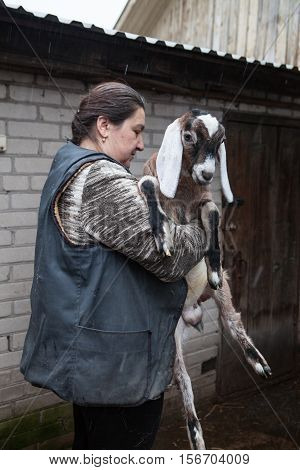 Saint-Petersburg Russia - December 14 2014: Goat Saanen. The woman in the yard with a group of purebred goats personally grown it. The kid on the hands.