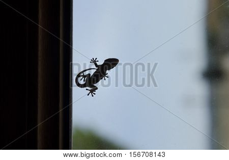 Shape of a small gecko on window