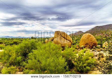 Cacti, Shrubs and large Rocks and Boulders in the desert near Carefree, Arizona, USA