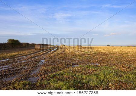 Hillside Straw Stubble