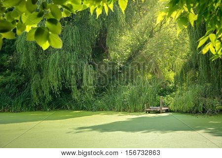 Beautiful overgrown forest lake lit by sunlight surrounded by trees.
