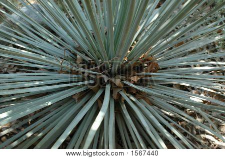 Spiky Desert Plant 139