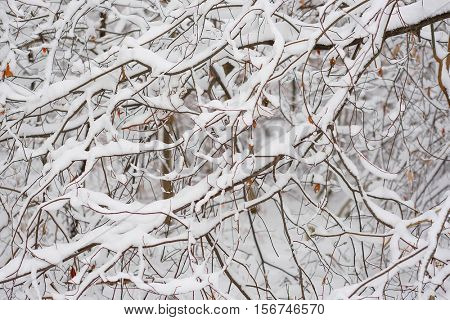 Background with the image of a winter forest