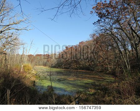 Fall at Stoney Ridge Section of Kettle Moraine Southern Unit in Wisconsin