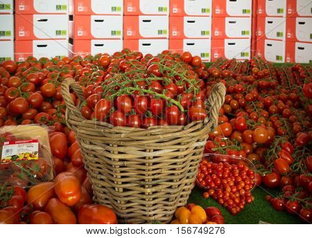 NAALDWIJK NETHERLANDS - APRIL 2 2016: reed basket with red tomatoes amid countless sizes of red tomatoes