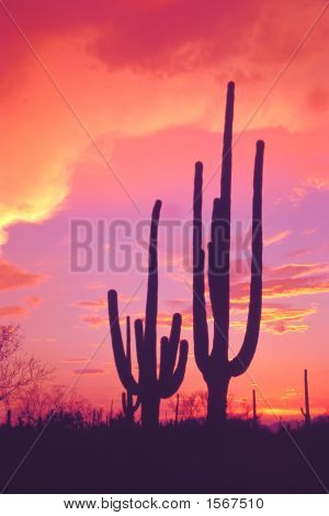 Southwestern Sunset With Saguaro Cactus
