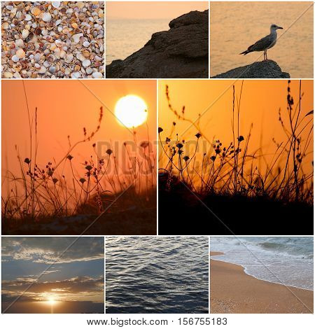 Seagull stands on a coastal stone in a sea sunset light. Beautiful seascape. Amazing sunset light. The gull and the wonderful sunset water surface. Tide. Collage of photos.