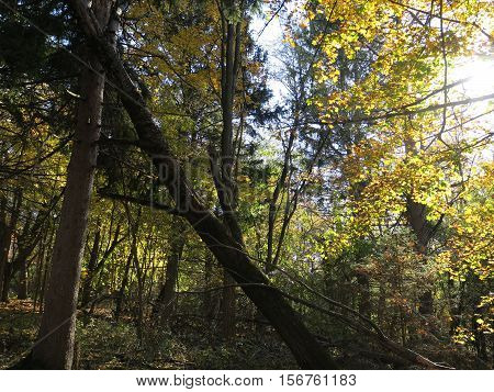 Late fall at Paradise Springs Portion of Kettle Moraine Southern Unit with trees showing color still