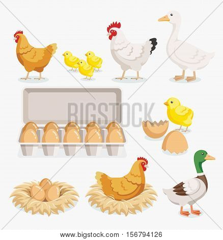Chicken duck chick egg packaging and chicken eggs on the nests. Vector illustration flat design.