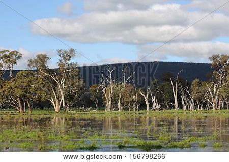 Floodwaters In Murringo Australia