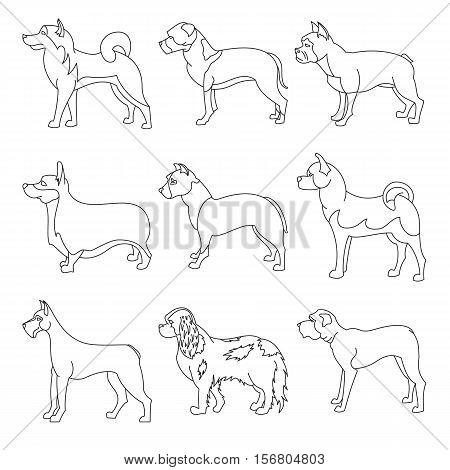Big set of purebred dogs in linear style. Akita and bulldog, corgi and mastiff, vector illustration