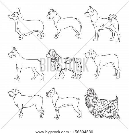 Collection of breeds dog in line. Pedigree malamute and akita, vector illustration
