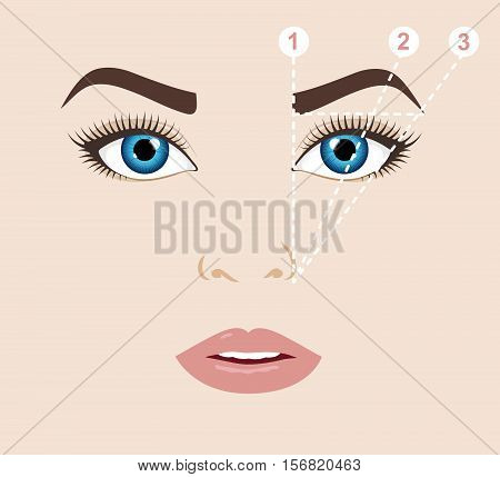 Woman face and eyebrow scheme. Trimming. How to shape your eyebrows at home. Makeup tips. Perfect brow shape for your face. Trendy mapping. Vector illustration.