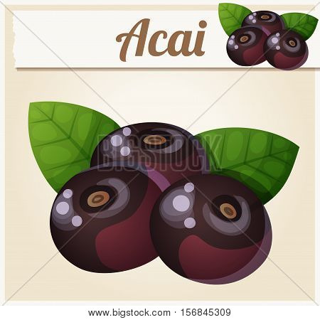 Acai berries illustration. Cartoon vector icon. Series of food and drink and ingredients for cooking.