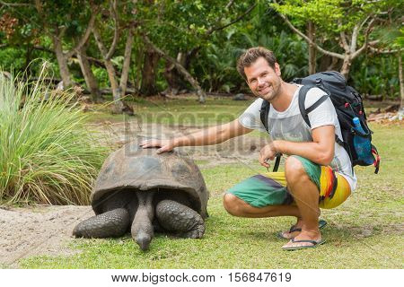 Male tourist caressing and admiring big old Aldabra giant tortoises, Aldabrachelys gigantea, in National Marine Park on Curieuse island, close to Praslin on Seychelles.