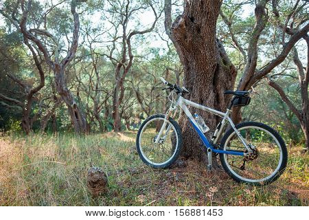 Mountain bike in an olive grove against a tree; copy space